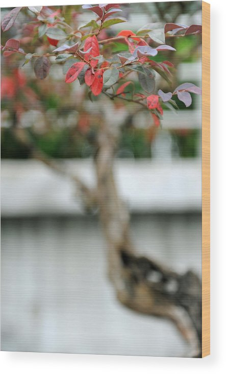 Red Wood Print featuring the photograph Bonsai by Jessica Rose