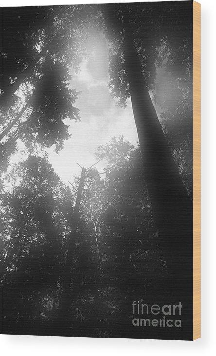 Trees Wood Print featuring the digital art Breathing Trees by Sven Brogren