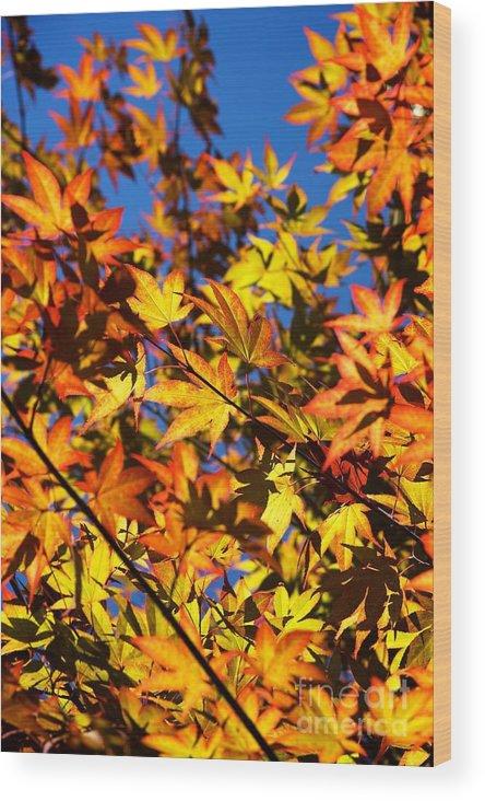 Season Wood Print featuring the photograph Burning Colours Ll by Hideaki Sakurai