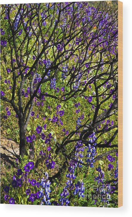 Landscape Wood Print featuring the photograph Burnt Bush by Greg Clure