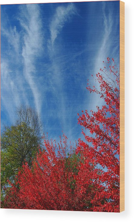 Autumn Wood Print featuring the photograph Burst Of Color by Gerry Tetz