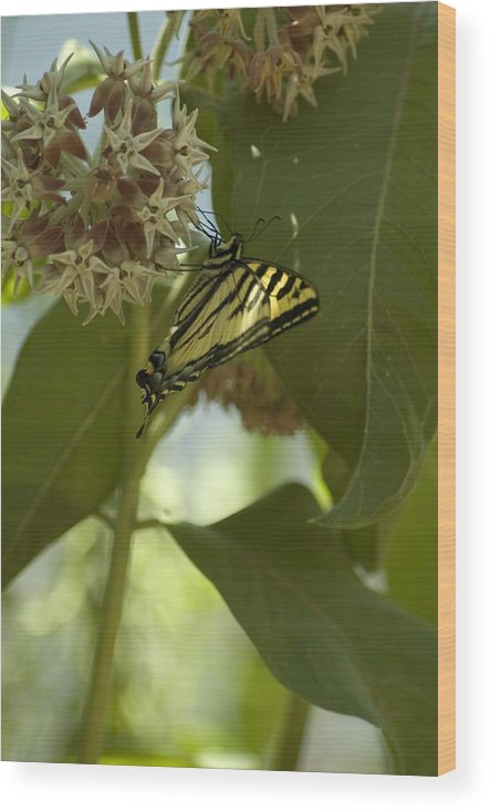 Flower Wood Print featuring the photograph Butterfly 1 by Sara Stevenson