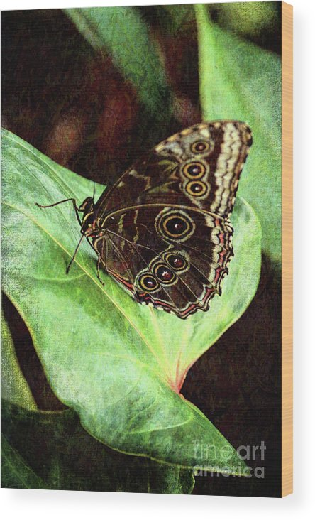 Photography Wood Print featuring the photograph Butterfly Walk by Jackie Farnsworth