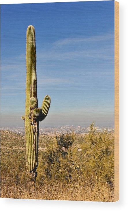 Arizona Wood Print featuring the photograph Cactus View by Tom Dowd