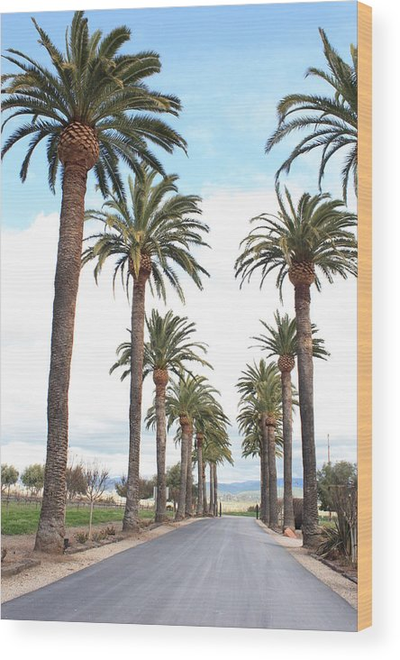 Palm Trees Wood Print featuring the photograph California Dreaming by Carol Groenen