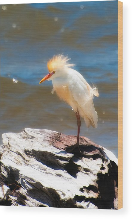 Animal Wood Print featuring the photograph Cattle Egret In Breeding Plumage by Rich Leighton