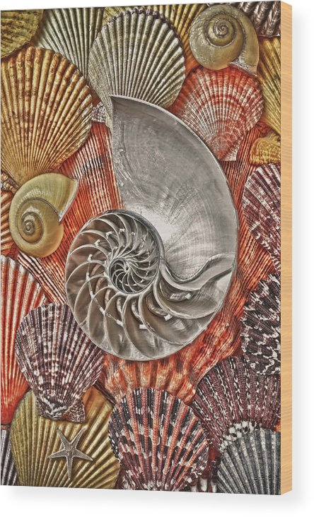 Chambered Nautilus Wood Print featuring the photograph Chambered Nautilus Shell Abstract by Garry Gay