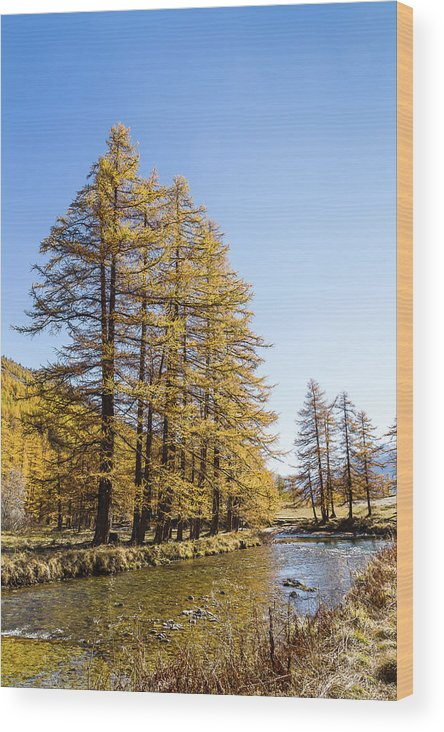 River Wood Print featuring the photograph Claree Valley In Autumn - 1 - French Alps by Paul MAURICE