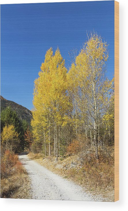 Colors Of Fall Wood Print featuring the photograph Claree Valley In Autumn - 11 - French Alps by Paul MAURICE