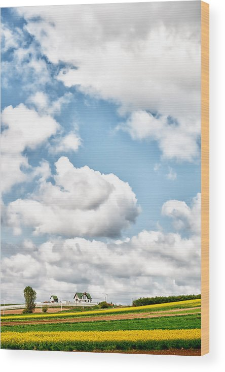 Clouds Wood Print featuring the photograph Clouds And Flowers by Johnny Sandaire
