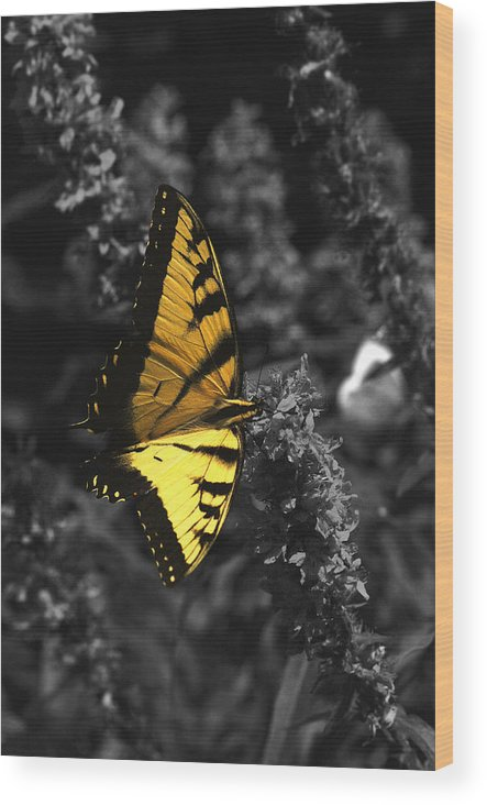 Black Wood Print featuring the photograph Color My World by Mandy Wiltse