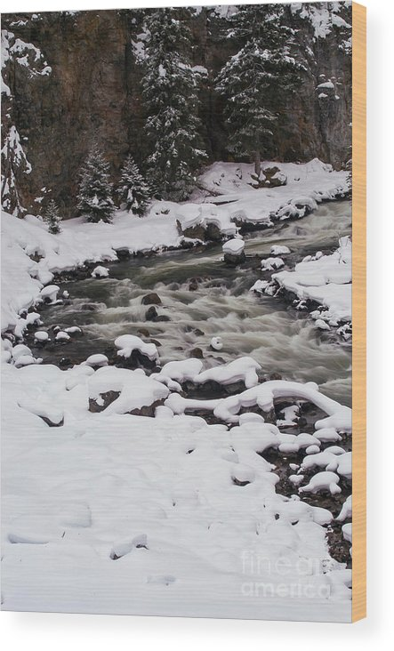 Yellowstone National Park Wood Print featuring the photograph Cool Winding River by Bob Phillips