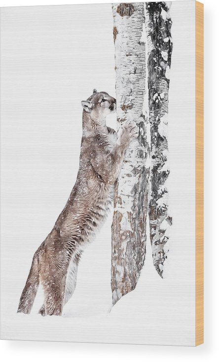 Cougars Tree Wood Print featuring the photograph Cougars Tree by Wes and Dotty Weber