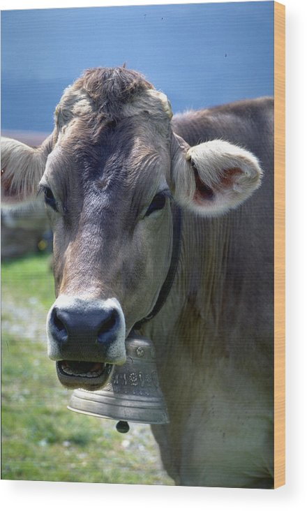 Cow Wood Print featuring the photograph Cow by Flavia Westerwelle