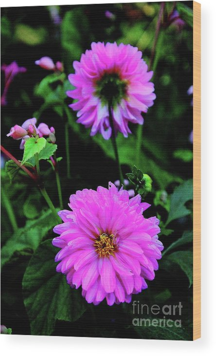 Dahlia Wood Print featuring the photograph Dahlia Mirror by Allen Nice-Webb