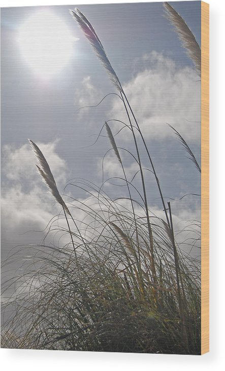 Wildgrass Wood Print featuring the photograph Dancing Grass by Jean Booth