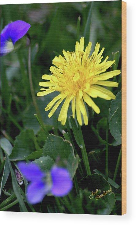 Flower Wood Print featuring the photograph Dandelion by Judi Quelland
