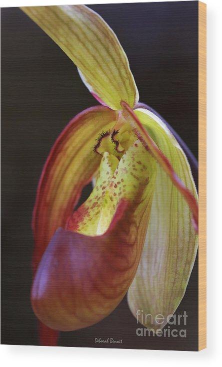 Flower Wood Print featuring the photograph Delicate Slipper by Deborah Benoit