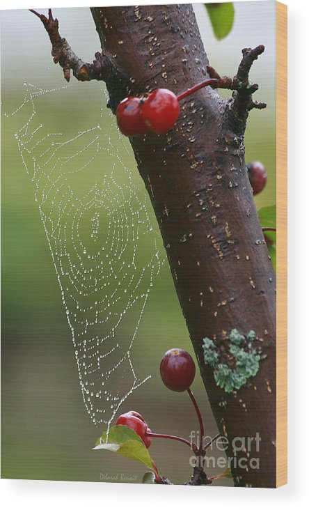 Tree Wood Print featuring the photograph Delicate Spider Weave by Deborah Benoit