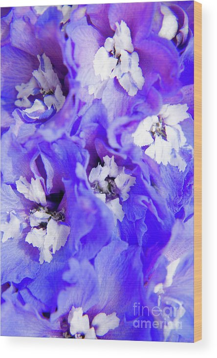 Nature Wood Print featuring the photograph Delphinium Flowers by Julia Hiebaum