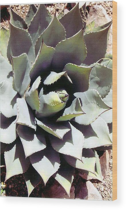 Flower Wood Print featuring the photograph Dessert Agave by Margaret Fortunato