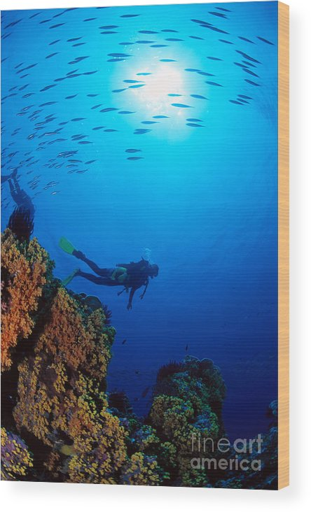 Bubble Wood Print featuring the photograph Diving Scene by Ed Robinson - Printscapes