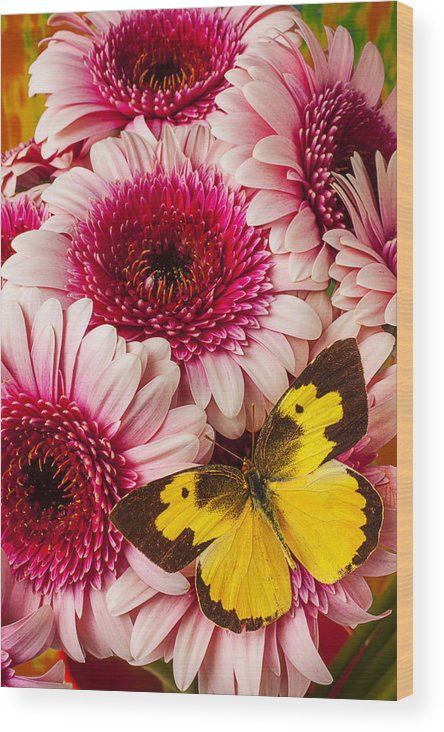 Dog Face Butterfly Butterflies Wood Print featuring the photograph Dog Face Butterfly On Pink Mums by Garry Gay