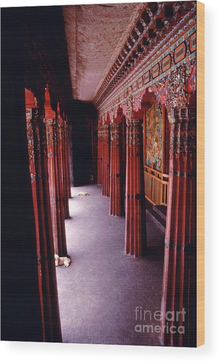 Sera Monastery Wood Print featuring the photograph Dogs On Sera Monastery Porch - Lhasa Tibet by Anna Lisa Yoder