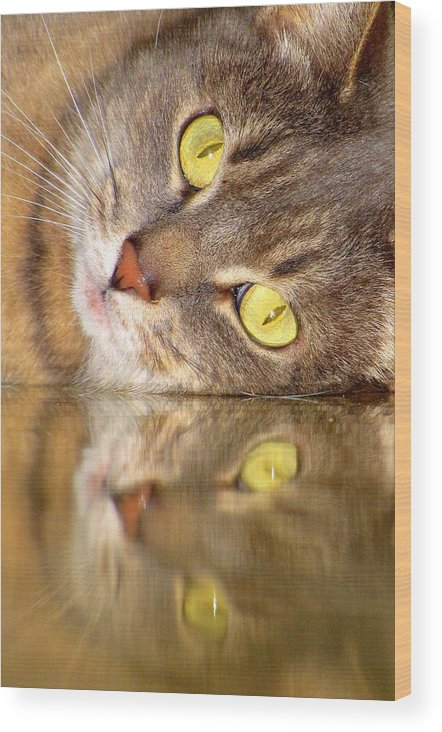 Cats Wood Print featuring the photograph Double Vision by Lori Pessin Lafargue