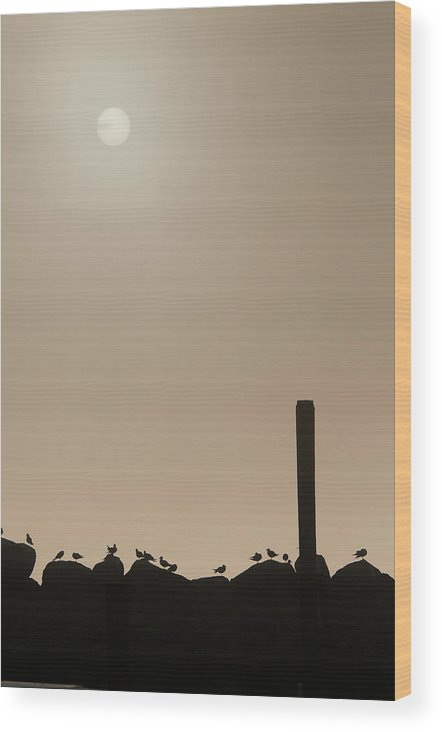 Animals Wood Print featuring the photograph Early Morning Silhouette  by Chad Davis