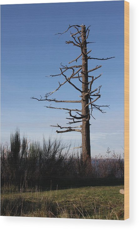 Tree Wood Print featuring the photograph Embracing The Open Sky by Michael Lee