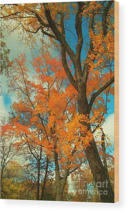 Fall Wood Print featuring the photograph Fall Colors 2 by Marjorie Imbeau