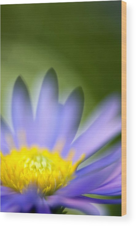 Flower Wood Print featuring the photograph Fall Flower by Silke Magino