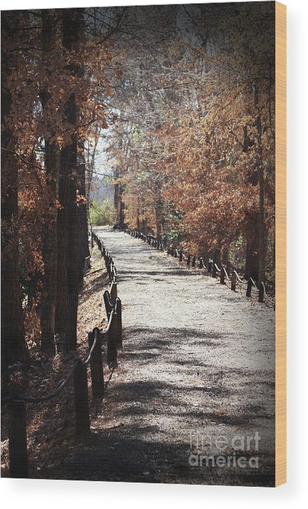 Fall Foliage Wood Print featuring the photograph Fall Wonder Land by Kim Henderson