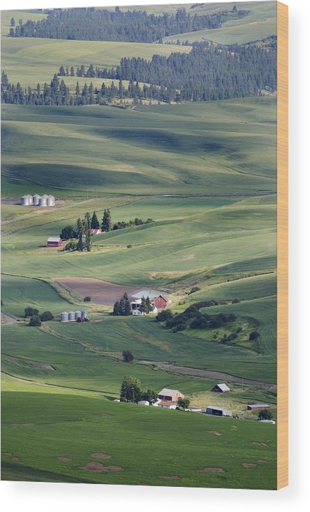 Fertile Wood Print featuring the photograph Farmland In Eastern Washington State by Carl Purcell