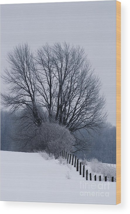Fence Wood Print featuring the photograph Fence Hills by Cathy Beharriell