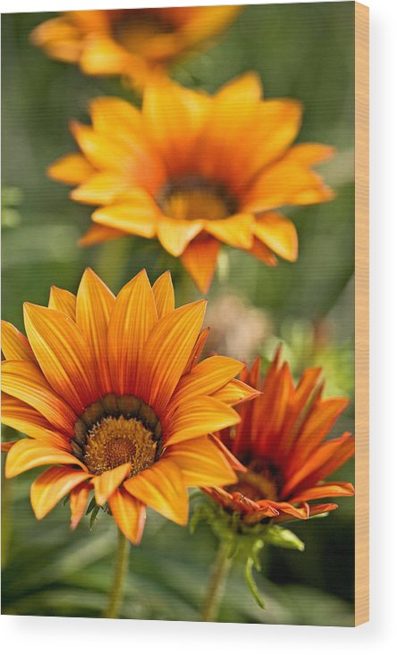 Floral Wood Print featuring the photograph Flowers by Carl Jackson