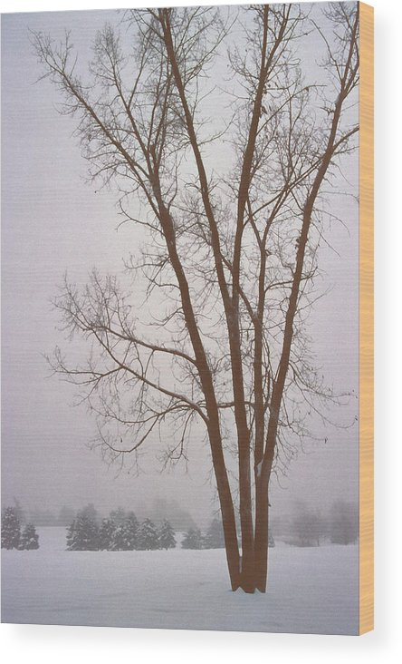 Nature Wood Print featuring the photograph Foggy Morning Landscape 13 by Steve Ohlsen