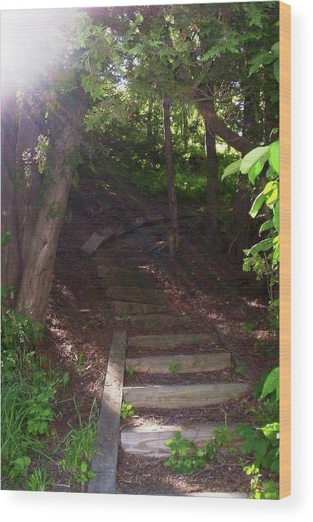 Path Wood Print featuring the photograph Follow Your Path by Rebecca Sturm