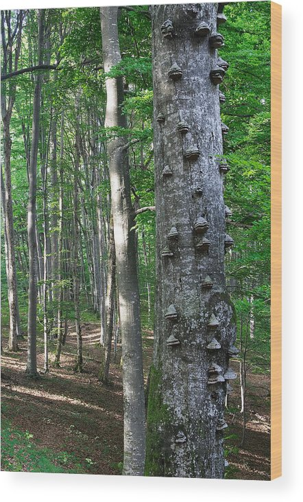 Forest Wood Print featuring the photograph Forest by Elisa Locci