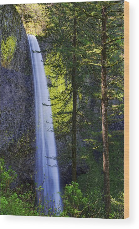Forest Mist Wood Print featuring the photograph Forest Mist by Chad Dutson