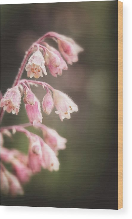 Heuchera Wood Print featuring the photograph Fuzzy Bells by Caitlyn Grasso