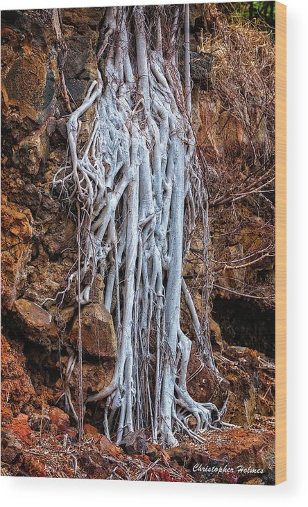 Roots Wood Print featuring the photograph Ghostly Roots by Christopher Holmes