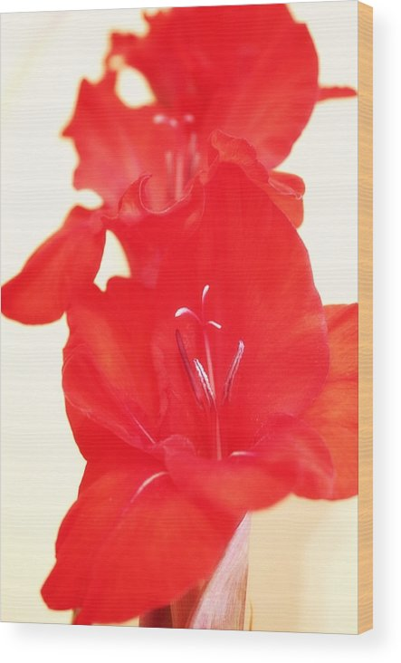 Wood Print featuring the photograph Gladiola Stem by Cathie Tyler