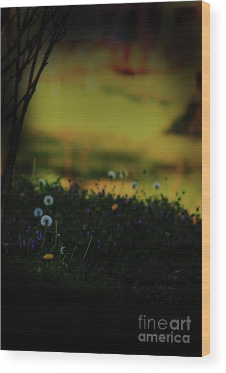 Nature Wood Print featuring the photograph Glowing by Kim Henderson