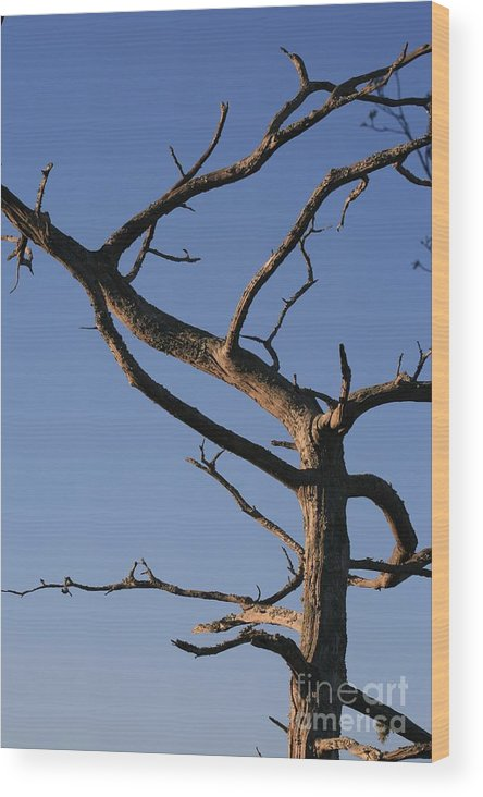 Tree Wood Print featuring the photograph Gnarly Tree by Nadine Rippelmeyer