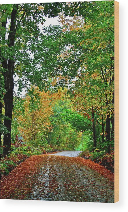 Country Wood Print featuring the photograph God's Confetti by Diana Hatcher