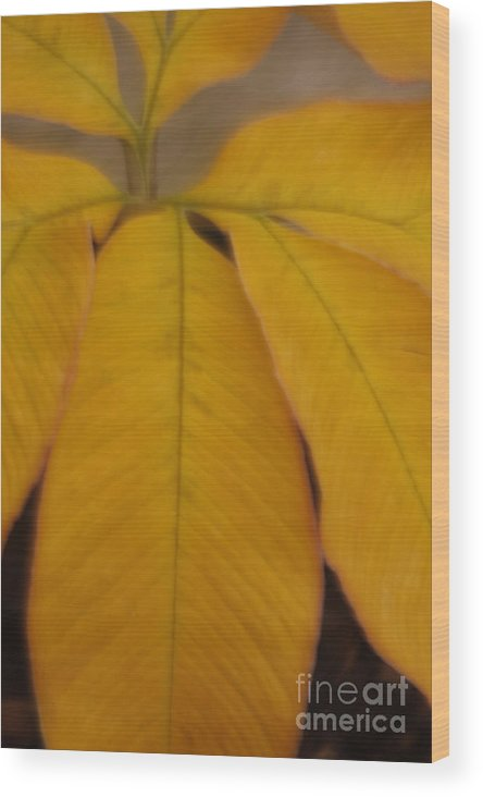 Leave Wood Print featuring the photograph Golden Umbrella by Katherine Morgan
