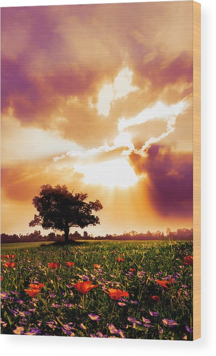 Barn Wood Print featuring the photograph Golds At Sunset After The Rain by Debra and Dave Vanderlaan