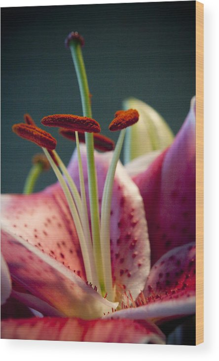 Flora Wood Print featuring the photograph Graceful Lily Series 7 by Olga Smith